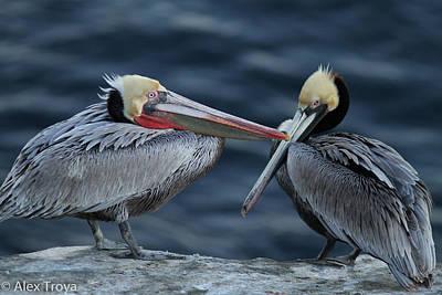 Pelikan Photograph - Pelikans In Love by Alex Troya