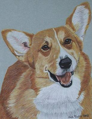 Drawing - Pembroke Welsh Corgi by Anita Putman