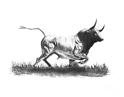 Rodeo Art Drawing - Pen And Ink Drawing Of Bull In Black And White by Mario Perez