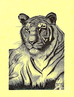 Drawing Drawing - Pen And Ink Drawing Of Royal Tiger by Mario Perez