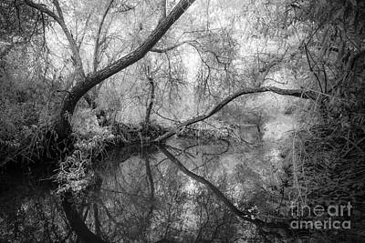 Photograph - Penasquitos Creek by Alexander Kunz