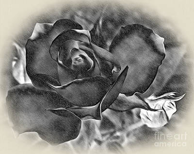 Raspberry Digital Art - Pencil And Ink Rose by Kaye Menner