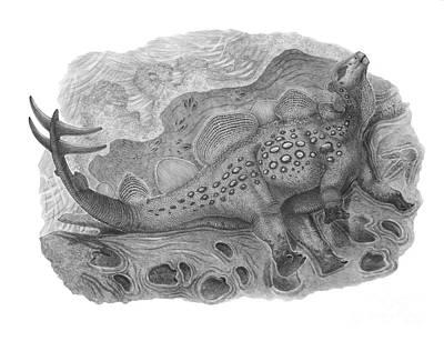 Animal Tracks Digital Art - Pencil Drawing Of Hesperosaurus Mjosi by Vladimir Nikolov