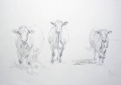 Pencil Drawing Of Three Cows Art Print