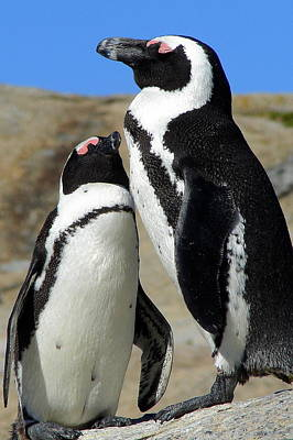 Photograph - Penguin Love by Ramona Johnston