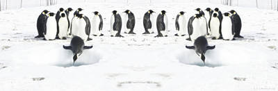 Digital Art - Penguin Lunch Time by R Muirhead Art