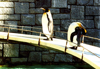 Photograph - Penguin Pals by Robert  Rodvik