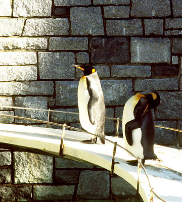 Photograph - Penguin Pathway by Robert  Rodvik