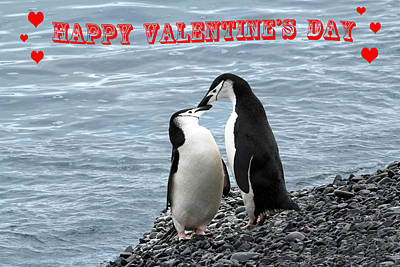Photograph - Penguin Valentine's Card by Ginny Barklow
