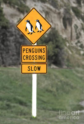 Photograph - Penguins Crossing Oamaru by Nareeta Martin