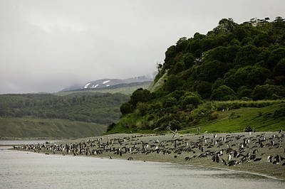 Beagle Wall Art - Photograph - Penguins Relax On A Beach by Ryan Donnell