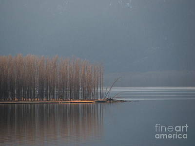Peninsula Of Trees Art Print by Leone Lund
