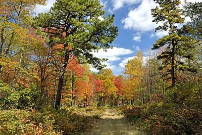 Pennsylvania Forest In Autumn Pocono Mountains Art Print