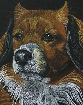 Drawing - Penny - Lhaso Apso Mix - Commission by Anita Putman