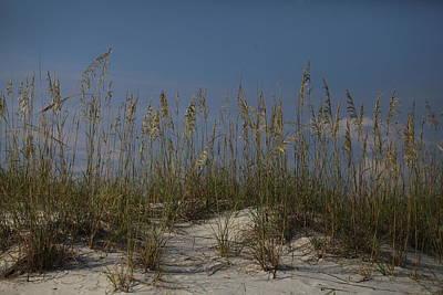 Photograph - Pensacola Beach Dunes by Vonda Barnett