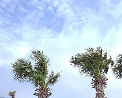 Photograph - Pensacola Palms by Lizi Beard-Ward