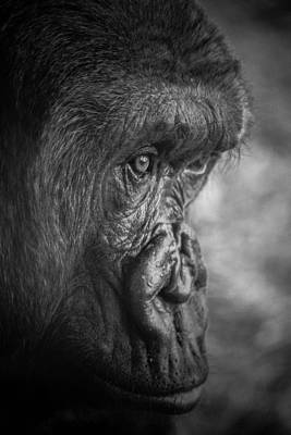 Photograph - Pensive Ape by John McArthur