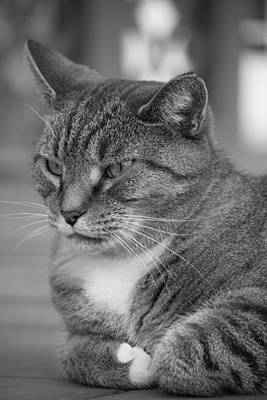 Photograph - Pensive Cat by Jennifer E Doll