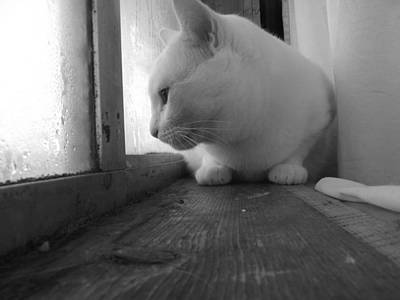 Photograph - Pensive Snobi by James Rishel