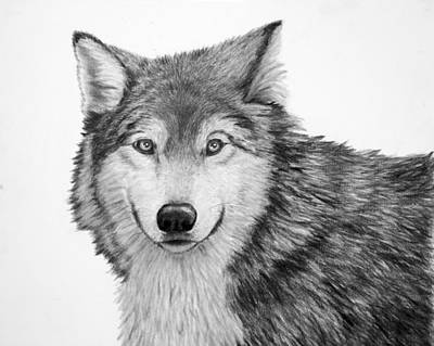 Drawing - Pensive Wolf by Lorraine Foster