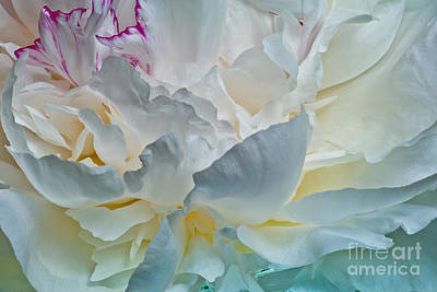 Photograph - Peonie 2012 by Art Barker