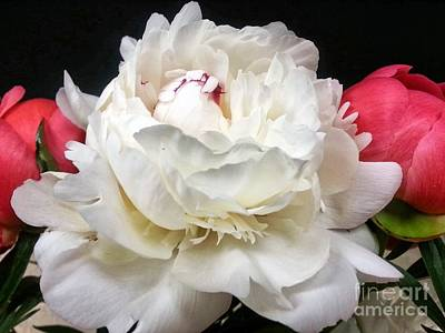 Photograph - Peonies by Heather L Wright