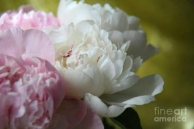 Photograph - Peonies by Lynn England