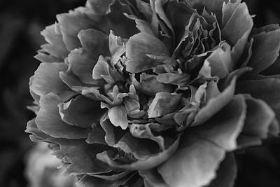 Photograph - Peony 2013 In Monochrome by Beth Akerman