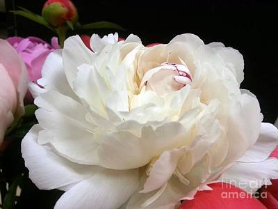 Photograph - Peony Addiction by Heather L Wright