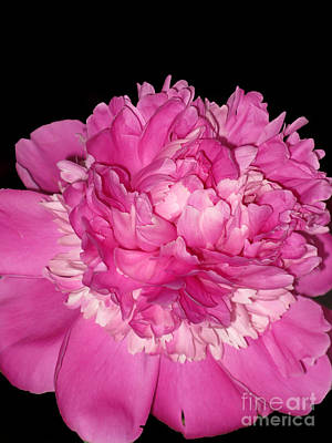 Photograph - Peony At Night by Ausra Huntington nee Paulauskaite