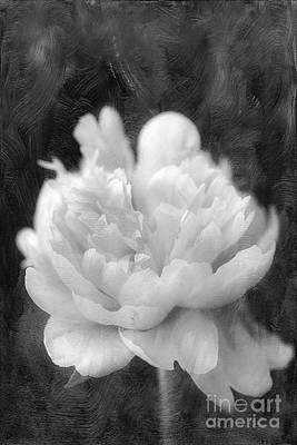 Peony  Black And White Print by Darren Fisher