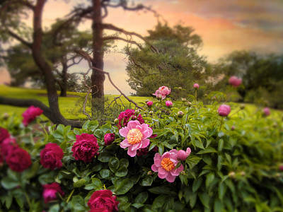 Photograph - Peony Blossom by Jessica Jenney