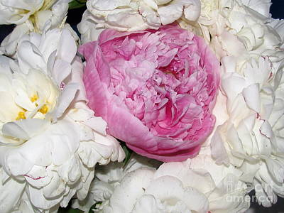 Art Print featuring the photograph Peony Bouquet 13 by Margaret Newcomb
