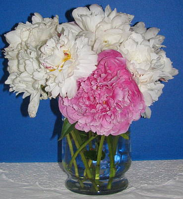 Art Print featuring the photograph Peony Bouquet 7 by Margaret Newcomb