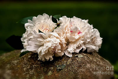 Photograph - Peony Bouquet On Mossy Rock by Lois Bryan