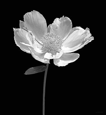 Photograph - Peony Flower Portrait Black And White by Jennie Marie Schell