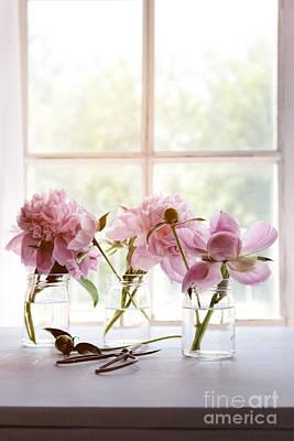 Photograph - Peony Flowers In Glass Jars Near Window by Sandra Cunningham