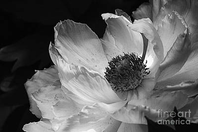 Photograph - Peony Glory by Terry Rowe