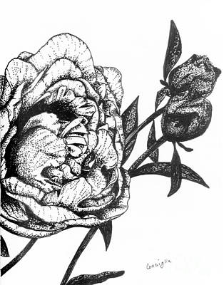 Ink Drawing Drawing - Peony In Black And White by Celia Fedak