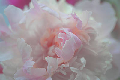 Peony Love Art Print by Jeff Burgess