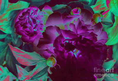 Peony Passion Art Print by First Star Art