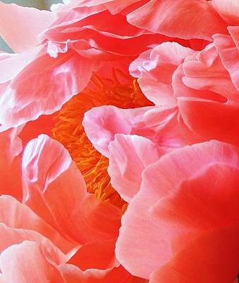 Photograph - Peony Petals by Stephanie Callsen