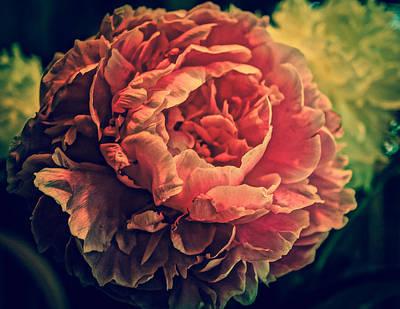 Photograph - Peony Pink by Ronda Broatch