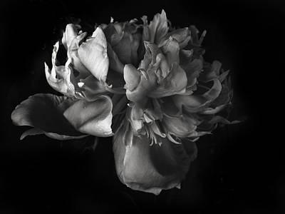 Photograph - Peony Study by Jessica Jenney