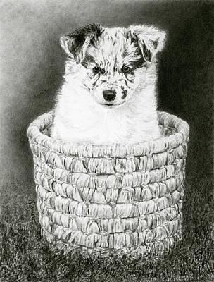 Drawing - Pepper by Ann Ranlett