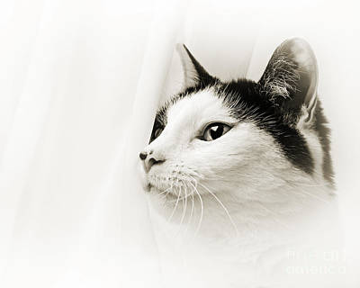 Andee Design Kitties Photograph - Pepper In The Mist by Andee Design