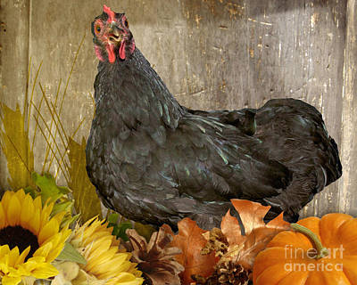 Photograph - Pepper's Autumn Stroll by Donna Brown