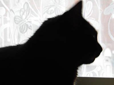 Pepsi Cat Silhouette Art Print