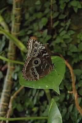 Butterfly Photograph - Perch by Nina Kurtz
