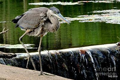 Photograph - Perched At Wehr's Dam by Tami Quigley